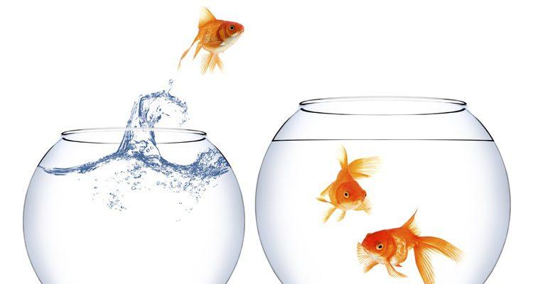 Al no estar cerrada, el pez podría saltar y salirse de la pecera
