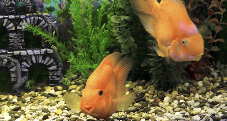 El filtro esponja es el más adecuado para acuarios pequeños
