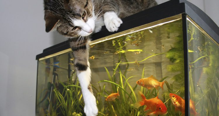 Con el acuario se evitan percances con otras mascotas de la casa