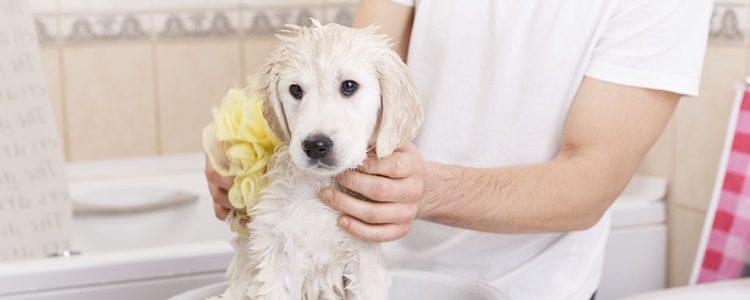 Hay toallitas especiales para los cachorros