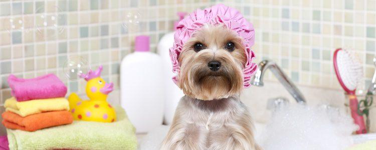 Conforme sea más largo el pelaje, con más frecuencia hay que bañar a tu perro