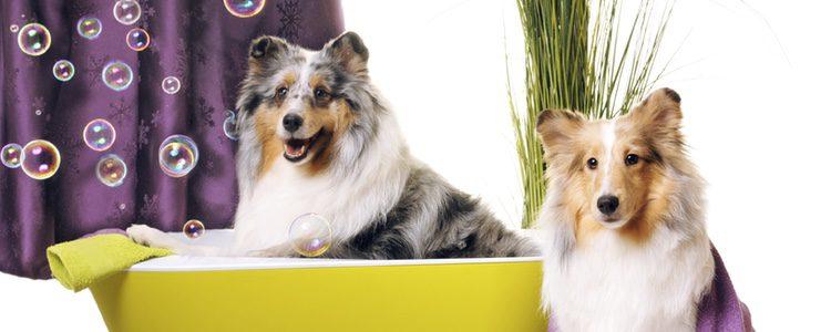 Existen centros especializados par lavar a tu perro