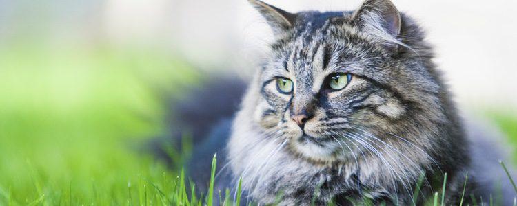 Es importante saber qué hacer con tu gato si te vas de viaje