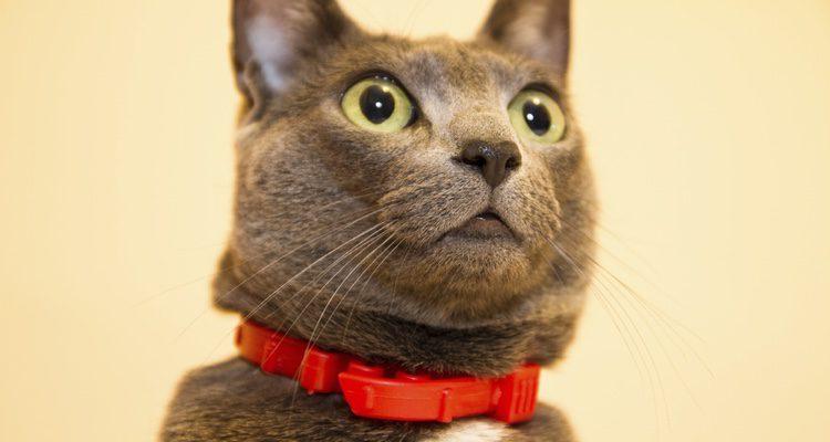 No se puede bañar al gato con el collar puesto