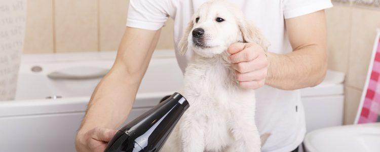 Puedes secarle el pelo con el secador