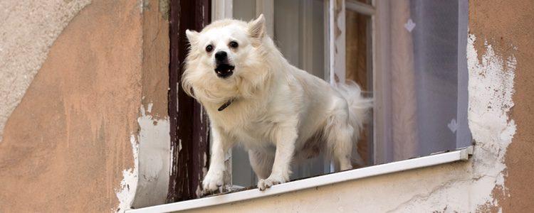 Tienes que enseñar a tu perro a calmarse