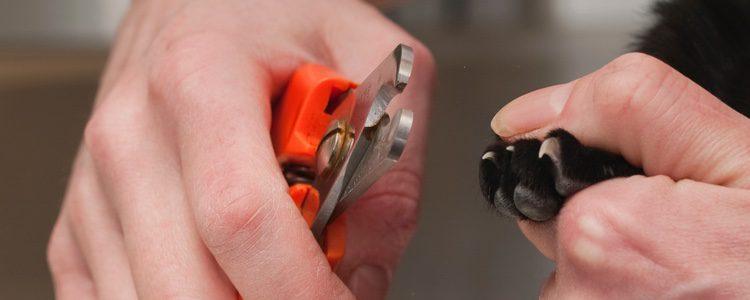 Asegúrate de utilizar las herramientas especiales para cortarle las uñas a tu gato
