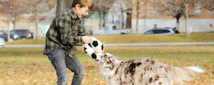 Esta raza de perro es muy inteligente e ideal para convivir con niños.
