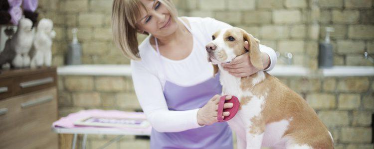 En ocasiones se utiliza la aromaterapia para relajar a las mascotas