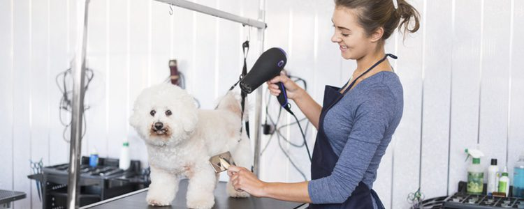 La higiene de tu mascota es el mejor mimo que le puedes regalar.