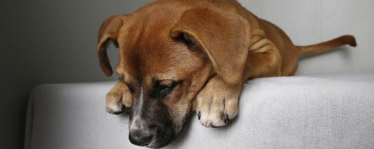 Hay que saber identificar cuando nuestro perro sufre estrés