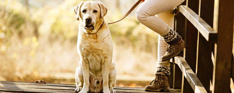 Es muy importante dedicarle tiempo a tu perro
