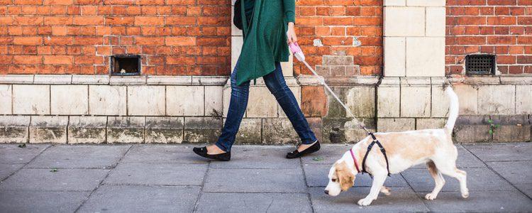 Es fundamental sacar a tu perro a pasear las veces que lo necesite