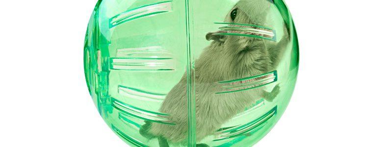 No es recomendable usar bolas de plástico, ya que producen estrés en el animal