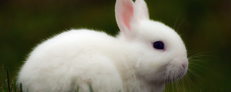 El conejo puede ser el animal perfecto para tener de mascota