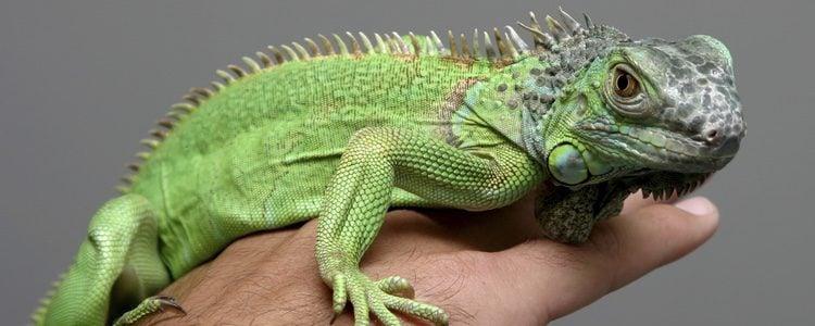 Existen lámparas especializadas para los reptiles