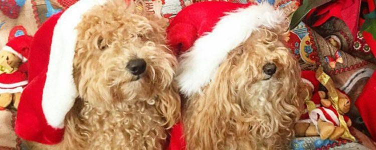 Hope y su cachorro Joe felicitan la Navidad / Instagram