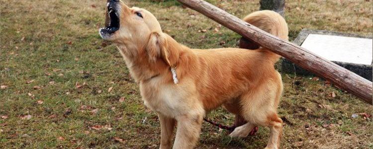 Busca el motivo por el que tu perro ladra
