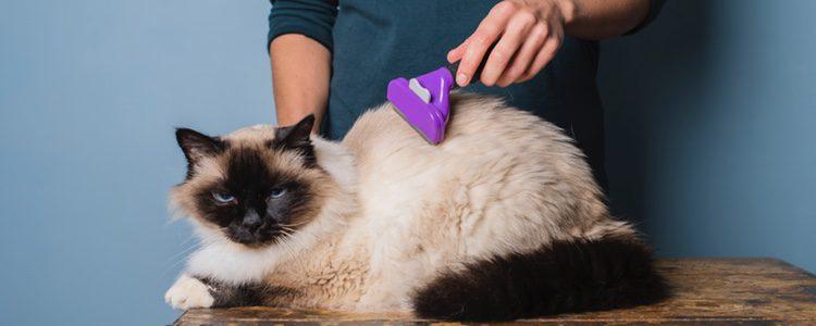 El pelo es muy importante en los gatos por eso hay que cuidarlo muy bien