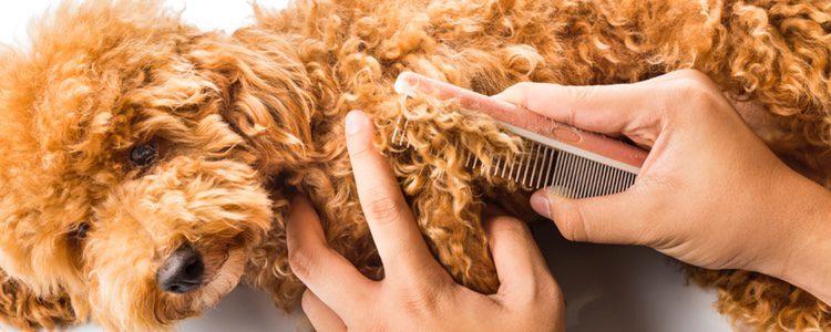 Los perros que tengan el pelo largo deberán cepillarse todos los días