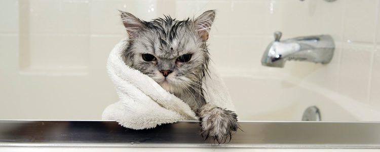 Es importante preparar a tu felino para este momento