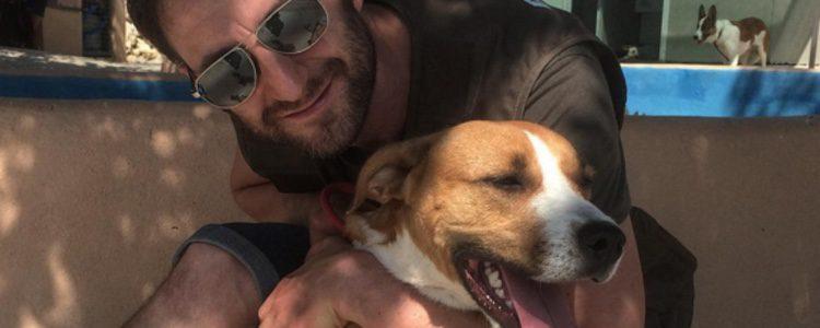 Dani Rovira y un perro para adoptar / Instagram
