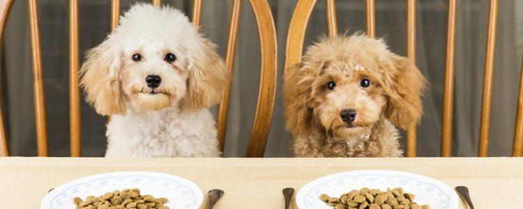 Un cachorro deberá comer pienso distinto a un adulto