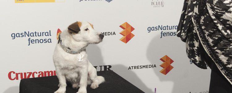 Pancho, el conocido Jack Russell Terrier que llegó al cine