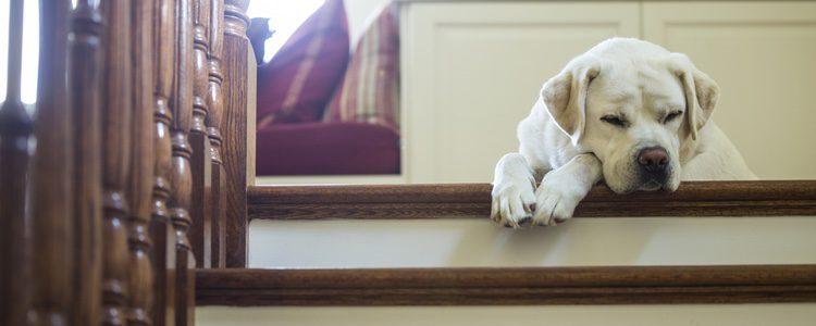 El perro tiene que adaptarse progresivamente