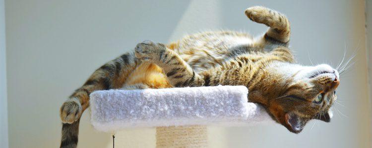 El movimiento es imprescindible para la salud del gato