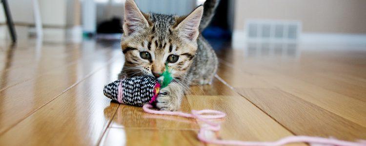 Las bolas de lana siempre han sido vinculas con estos felinos