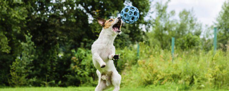 Algunas veces a los perros les cuesta diferenciar la realidad de la ficción