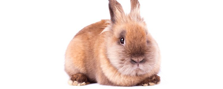 Si tu conejo muestra sobrepeso es importante que se ponga remedio antes de que genere problemas de salud