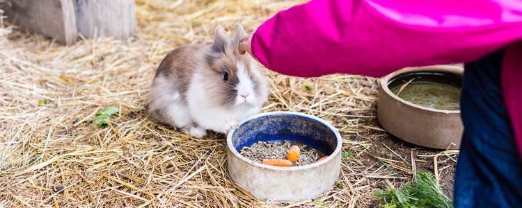 La zanahoria tiene bastante azúcar, por lo que sería aconsejable cambiarlo por otra verdura