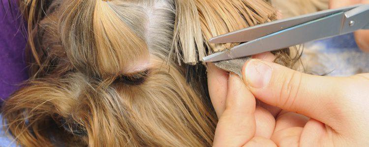 El corte de pelo es una necesidad