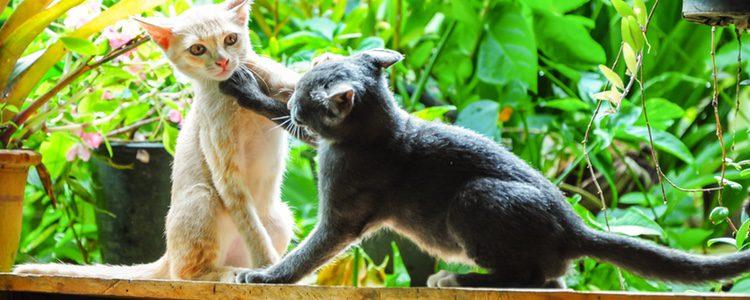 Los gatos tienen emociones que pueden controlar