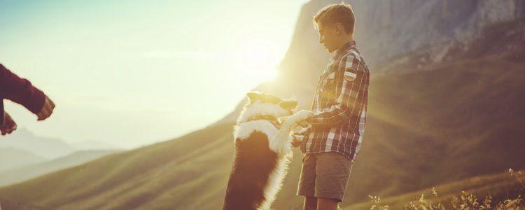 Los Border Collie son unos perros muy fieles a sus dueños