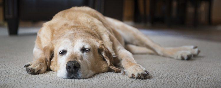 El perro necesita un espacio adecuado para dormir