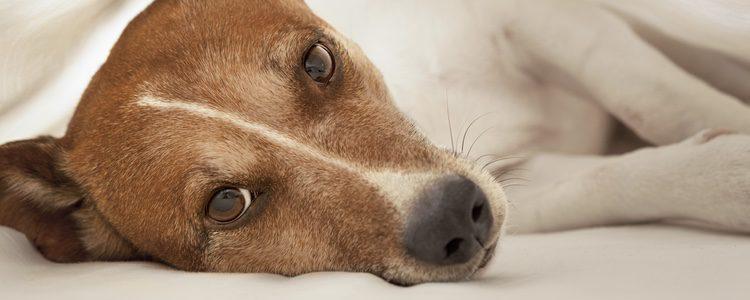 Si tienes dudas, acude a tu veterinario más cercano