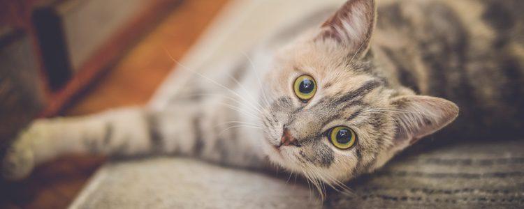 Facilítale las cosas y haz que tu gato se adapte rápidamente