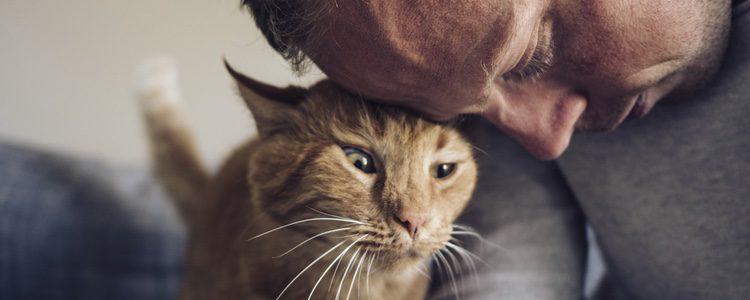Algunas veces los gatos se vuelven agresivos