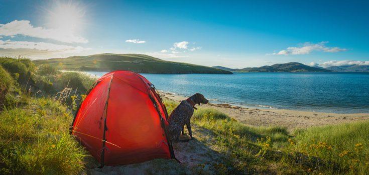 Si decides irte a un camping con tu perro debes asegurarte de que el viaje sea divertido y seguro para ambos