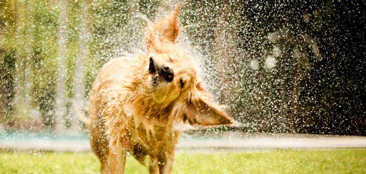 Solo hace falta una manguera para que tu perro y tú acabéis empapados de agua