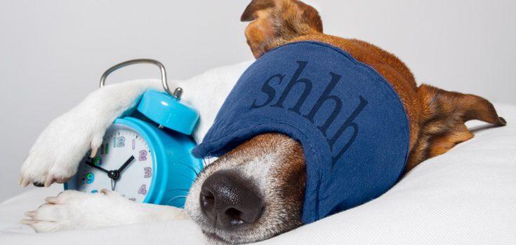 Tras una larga caminata tu perro y tú necesitaréis descansar