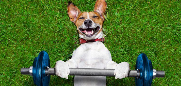 Ofrece a tu perro la ocasión de realizar el ejercicio que necesita. Os beneficiará a ambos