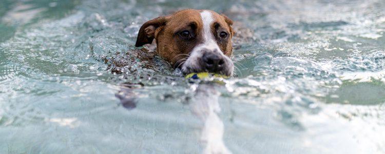El miedo al agua es muy común entre las mascotas