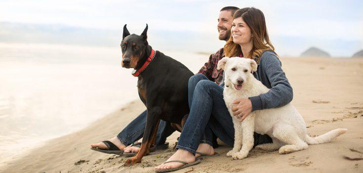 Tu perro y tú podeís disfrutar de un estupendo día de playa