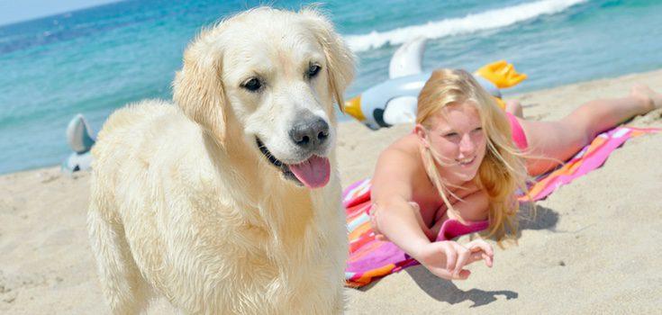 Busca dentro de cada localidad las playas en las que puedes disfrutar con tu perro