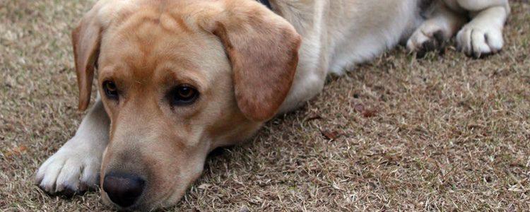 Si tu amigo de cuatro patas no mejora es recomendable que visite el veterinario