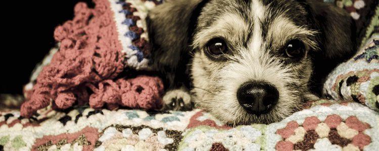 El veterinario te recetará un tratamiento u otro dependiendo de la gravedad del hipo